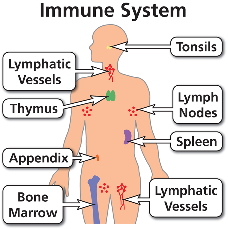 10 Ways To Strengthen Your Immune System - Mojo Multiplier: Build ...